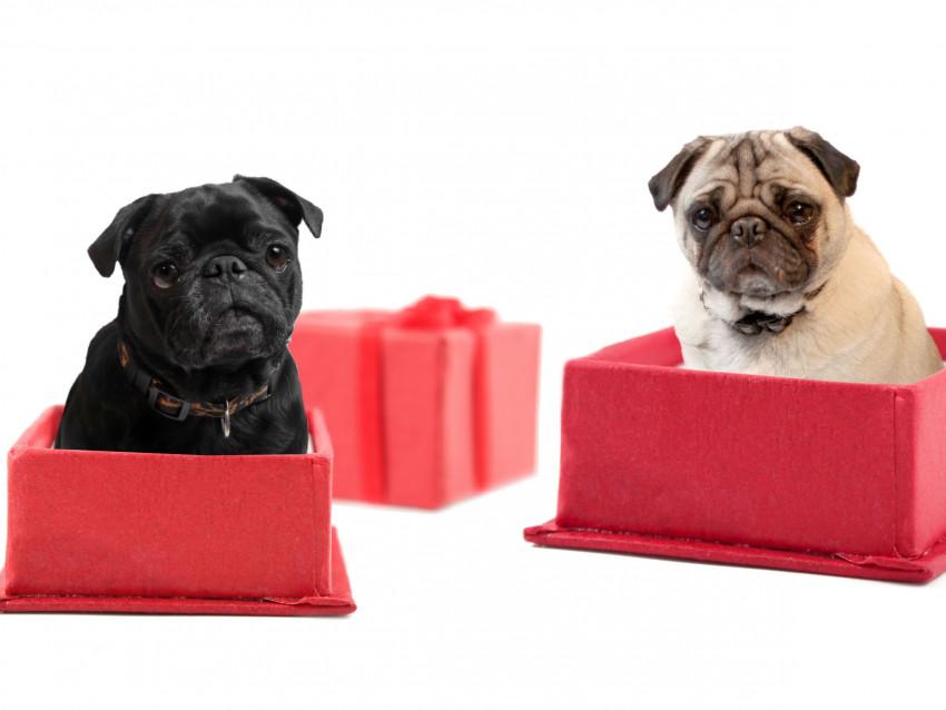 comment bien pr parer l 39 adoption d 39 un chien. Black Bedroom Furniture Sets. Home Design Ideas