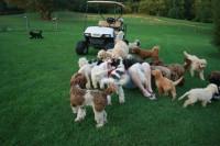 Se renseigner sur un éleveur canin