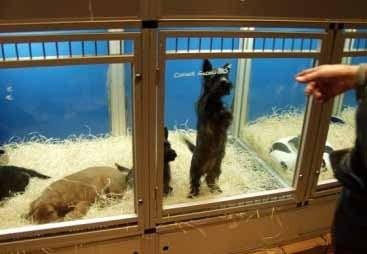 Comment choisir un bon élevage où acheter un chien