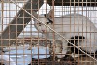 Qu'est-ce qu'un refuge animalier ?