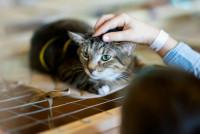 Les conditions à remplir pour devenir bénévole au sein d'un refuge animalier