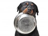 3. Servir des repas réguliers à son chien