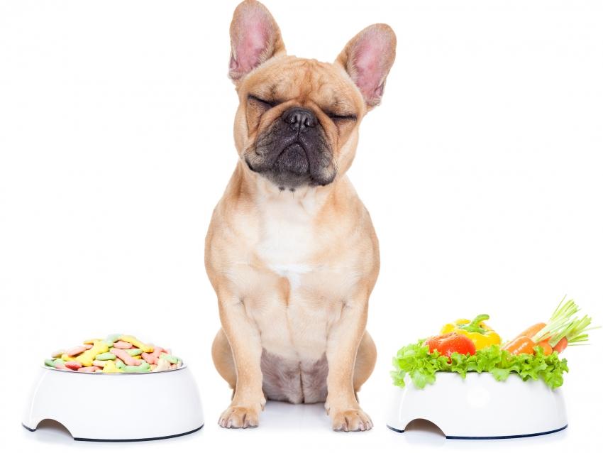 Très 10 règles de base pour bien alimenter son chien HY32