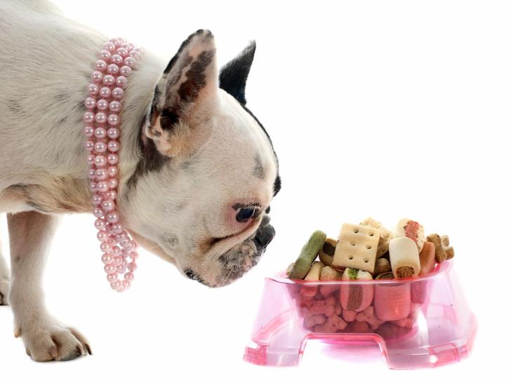 Comment bien alimenter son chiot bien nourrir son chiot for Alimentation chien maison