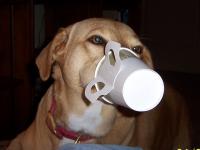 Les autres produits alimentaires déconseillés aux chiens