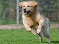 Les besoins alimentaires du chien varient en fonction de ses dépenses énergétiques