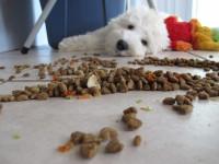 Adapter l'alimentation du chien à sa situation