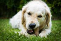 Les différents types de friandises pour chien