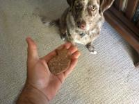 Friandises pour chien et éducation font bon ménage