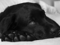 Qu'est-ce qu'une assurance santé pour chien ?