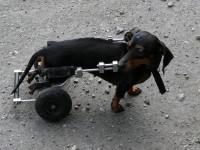 Pourquoi assurer son chien ?
