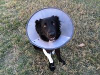 Comment assurer son chien ?