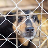 Abandons et euthanasies de chiens : des chiffres qui donnent le tournis