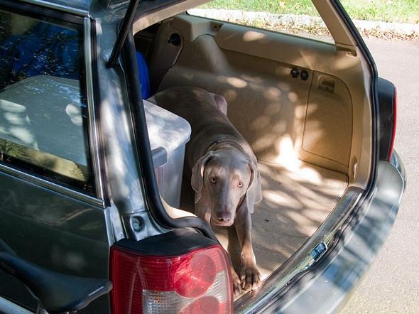 la peur du chien en voiture. Black Bedroom Furniture Sets. Home Design Ideas