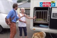 Le quotidien du chien dans un camping-car
