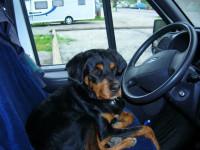 Où mettre son chien dans un camping-car pendant les trajets?