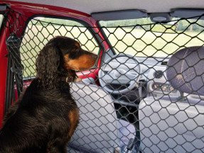 Voyager avec son chien en voiture quels quipements - Grille pour chien en voiture ...