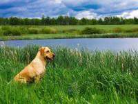 Le chien Sagittaire aime se promener dans la nature
