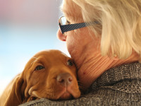 Le chien Vierge a besoin d'affection