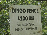 L'avenir du dingo