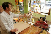 Qu'est-ce qu'un chien d'assistance ?