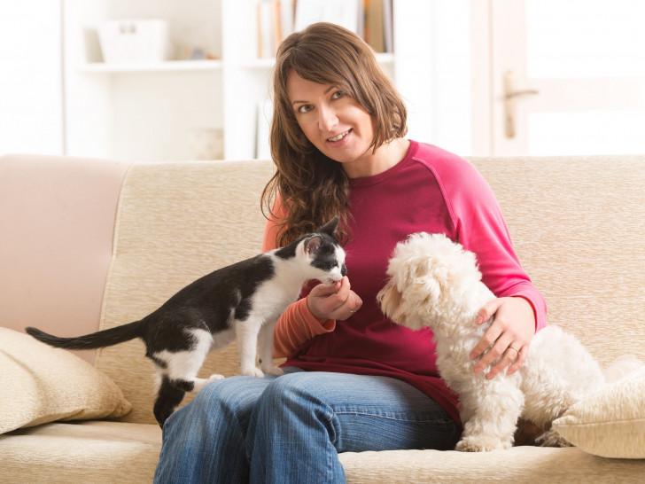 Rencontre entre chien et chaton