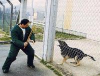 Le dressage pour devenir un chien de garde
