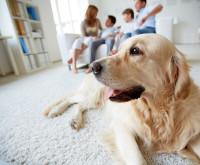La place du chien au sein de la famille