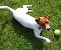 Peut-on éduquer un chien sans l'entraîner ?