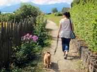 Apprendre la marche en laisse à son chien par le renforcement positif