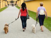 Apprendre à son chien à marcher en laisse grâce au clicker-training