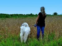 D'autres méthodes douces pour apprendre à son chien à marcher en laisse