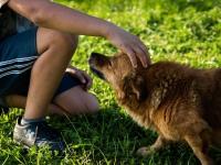 Caresser ou tapoter son chien sur la tête