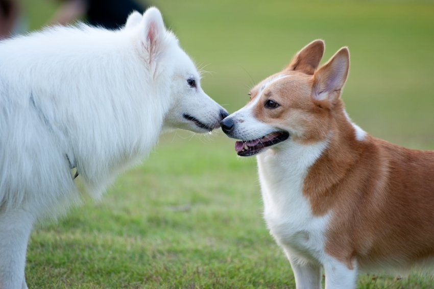 rencontre entre un chien adulte et un chiot)