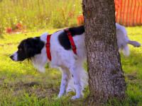 Les signaux olfactifs du chien