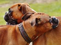 Les signaux tactiles du chien