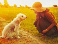 Le chien sait communiquer avec l'humain