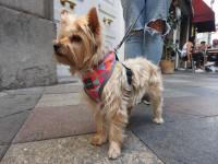 Habituer son chien à l'environnement de la ville
