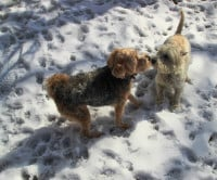 La socialisation du chien avec ses congénères