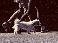 Apprendre à son chien des positions simples