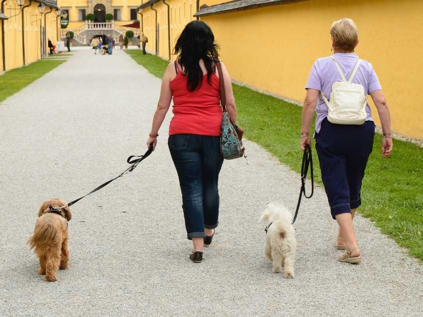 comment apprendre à son chien à marcher en laisse