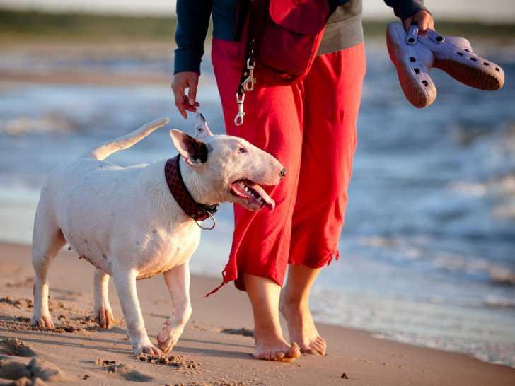 apprendre à son chien à marcher au pied sans laisse