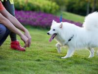 Apprendre le rappel à un chien adulte