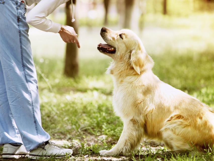 Comment enseigner le rappel à son chien