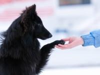 Un chien n'a pas le même langage qu'un être humain