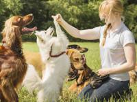 Faire la différence entre le comportement du chien et son obéissance : cas pratique