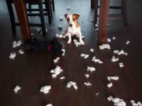 Associer éducation et comportementalisme pour une meilleure obéissance du chien
