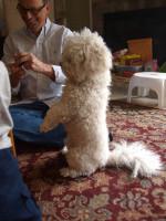 Dressage du chien : apprendre des tours à son chien