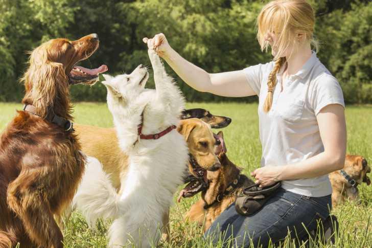 tour à apprendre à son chien