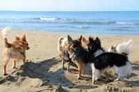 L'absence de cadre mène au déséquilibre du chien